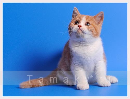 ну что скажешь, просто красавец котеночек