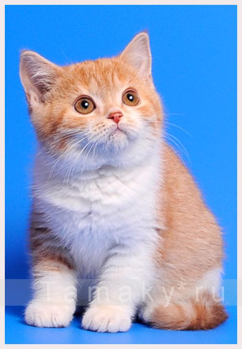 какой красавчик котик!!!